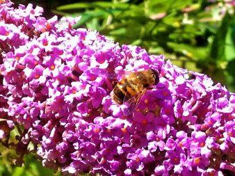 Bees Wales Natural Honey